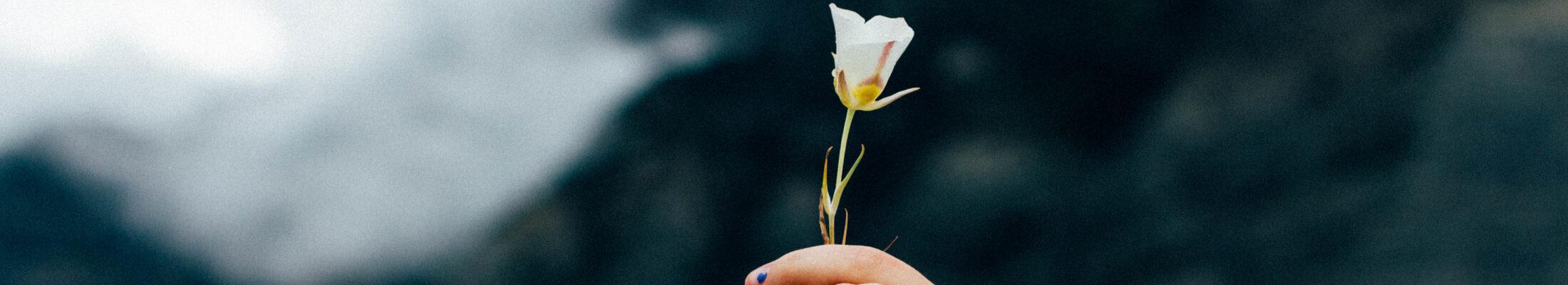 Foto von zwei Händen mit einer Blume